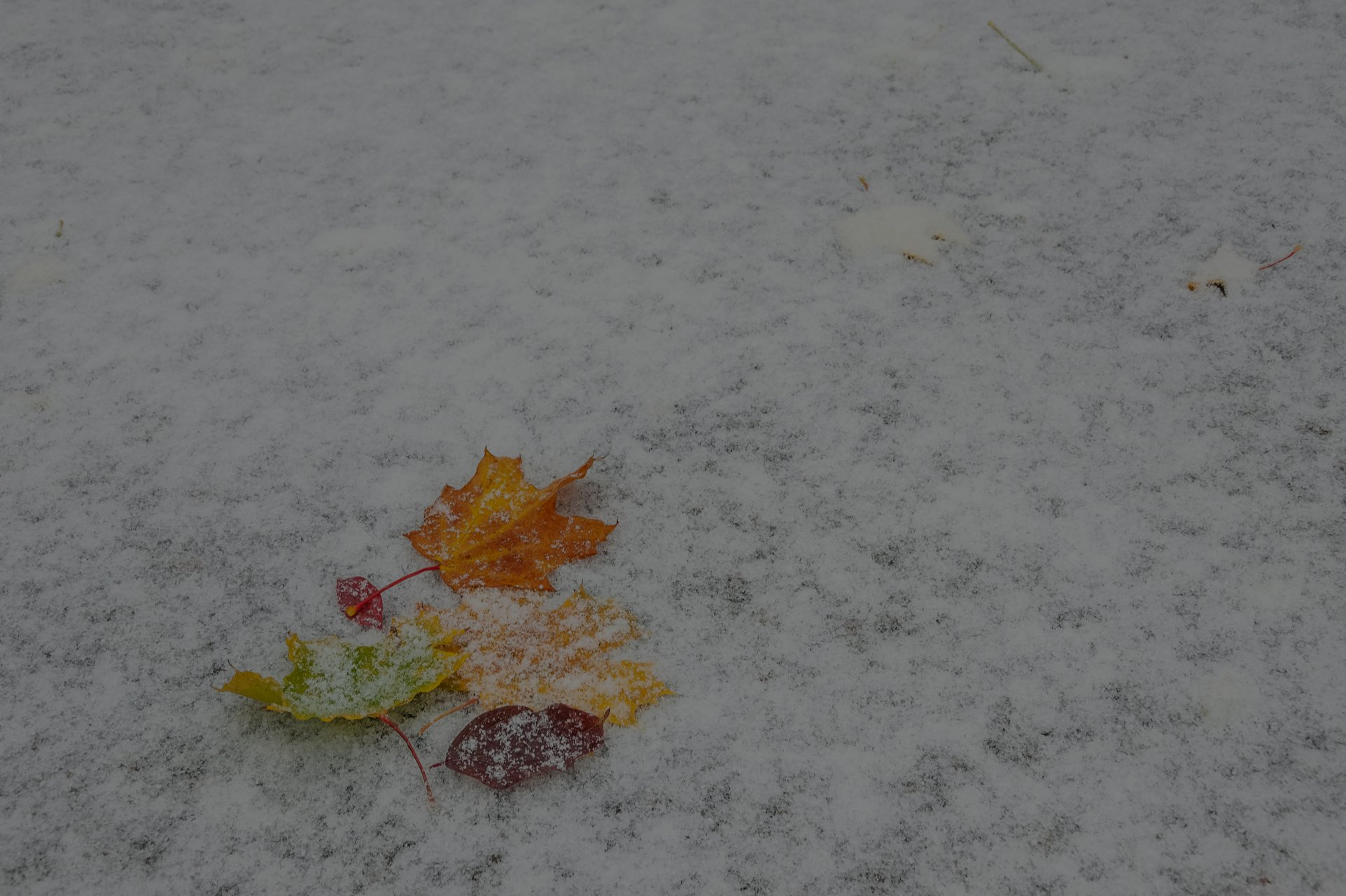 Prepare Your School for Winter Weather