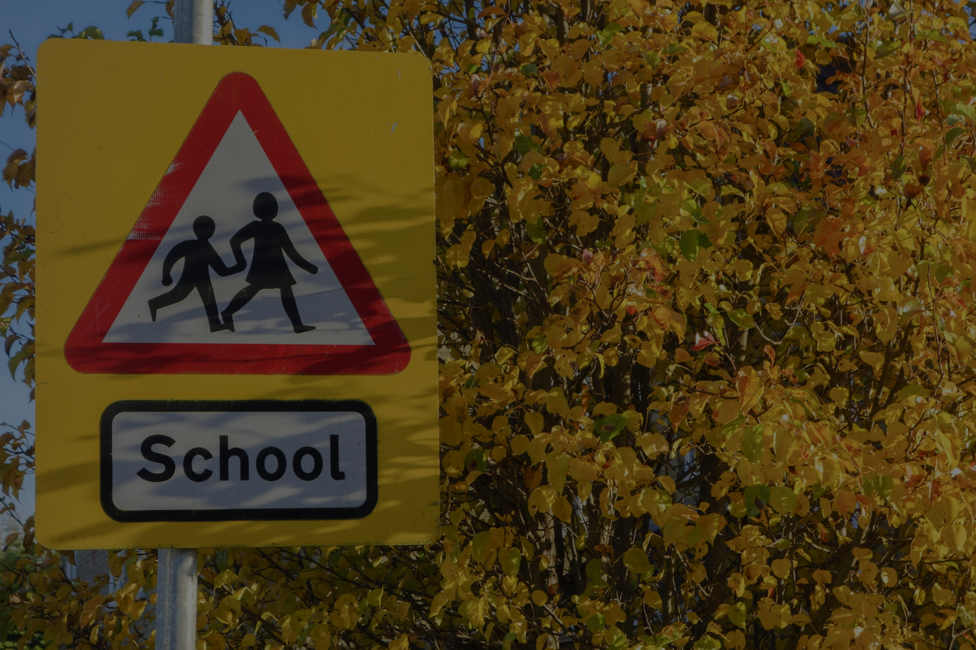 Your Guide to Improving School Transport Safety